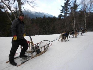 Dogsledding on the Mount Washington Auto Road