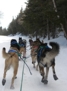Dogsledding back down the Auto Road